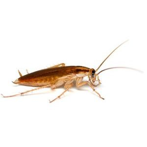Is Fusion a cockroach?